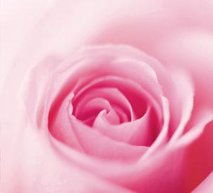 Academie rose